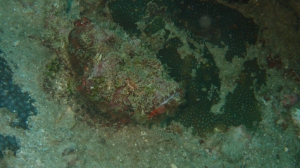Reef Stonefish - How Did You Find Me?