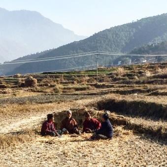 Chilling in flat rice fields