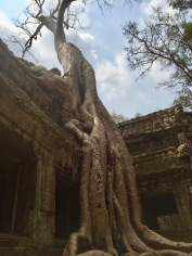 Overgrown tree at Ta Prohm