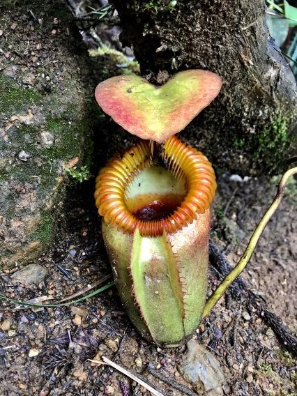 Heart-shaped pitcher